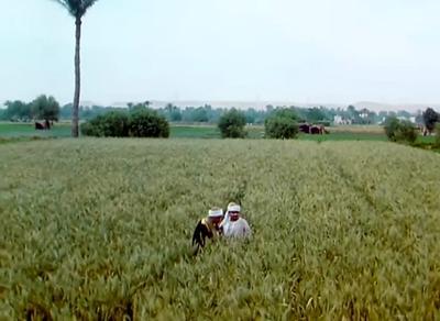صورة 10 من فيلم صعيدي في الجامعة الأمريكية -
